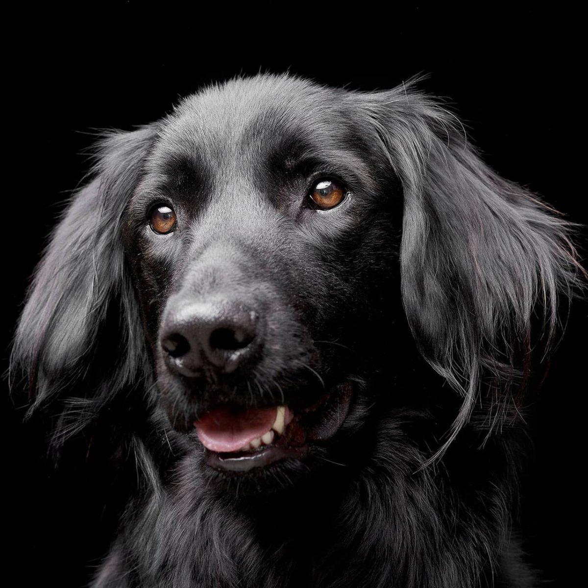 hond 1-1