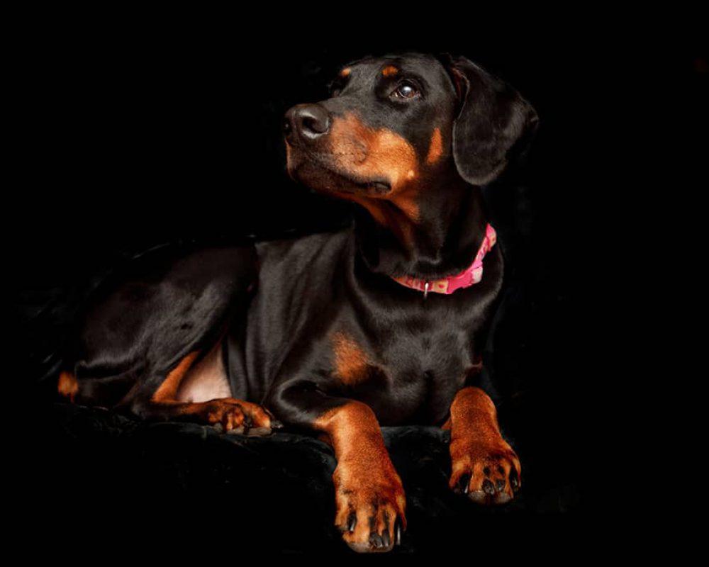 hond 5